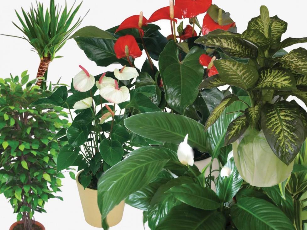 Balkonda Terasta ya da Bahçede Bitki Yetiştirenlerin Dikkatine