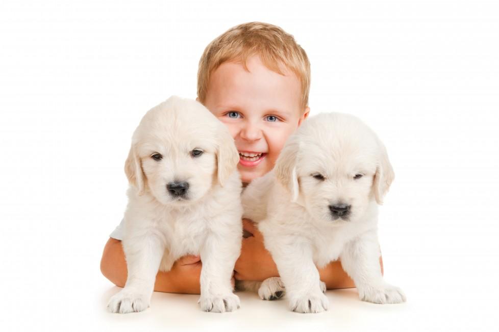 Çocuğunuza Hayvan Almadan Önce Bir Daha Düşünün