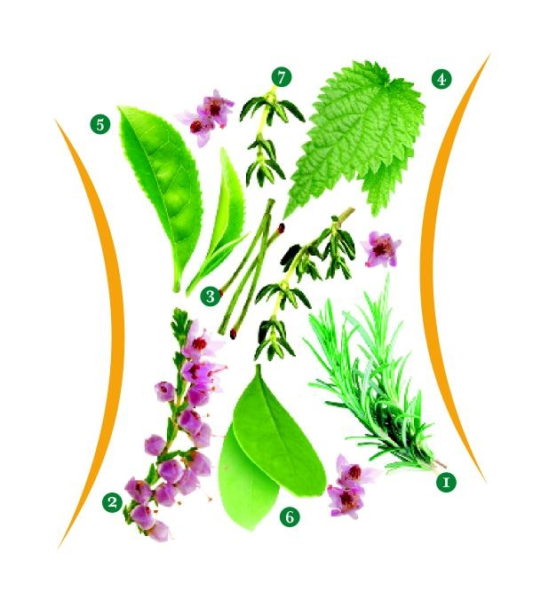 Metabolizmayı Hızlandıran 7 Mucize Ot